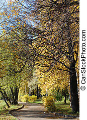 Colourful autumn park in solar weather