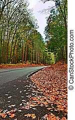 Curving Fall Forest Road