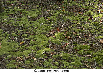 Moss - A close-up view of moss on the forest floor.