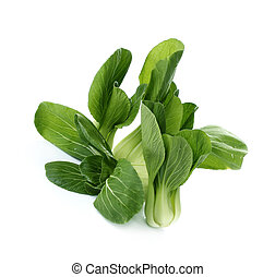 Bok choy chinese cabbage or Qing geng cai isolated on white...