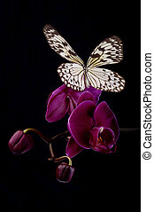 Butterfly on pink orchids. - Butterfly on pink orchids taken...