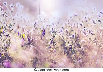 Meadow - Summer flowers meadow
