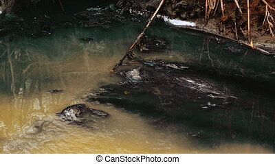 River Water Pollution And Contamination from Chemical...