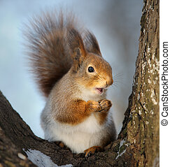 The squirrel - The squirrel in the winter in a tree fork
