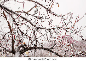 Ice-covered tree branches after freezing rain