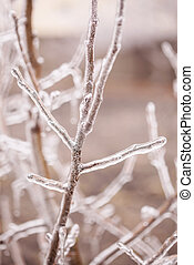 Ice-covered branches tree after freezing rain