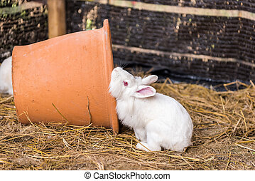 Rabbit on a hay stack