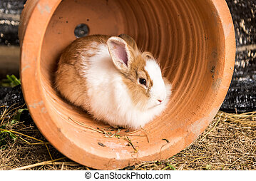 Rabbit in the pot