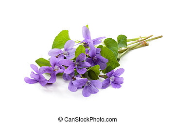 Wild spring flowers - Bunch of violet flowers Isolated on...