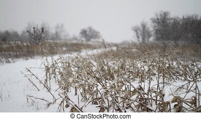 Winter Corn Field Road - Winter Corn Field Snowfall Road