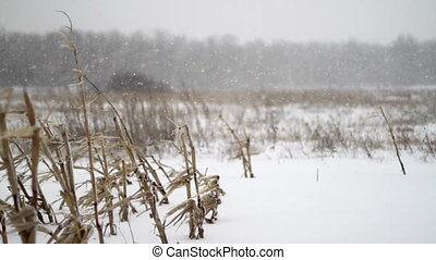 Winter Corn Field Snowfall Coming