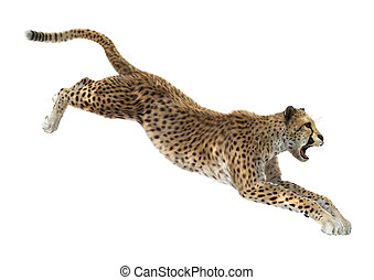 Cheetah - 3D digital render of a hunting cheetah isolated on...