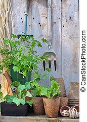 Plantas de semilla, y, jardinería, herramientas,