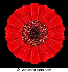 vermelho, flor, Mandala, caleidoscópio, isolado,...