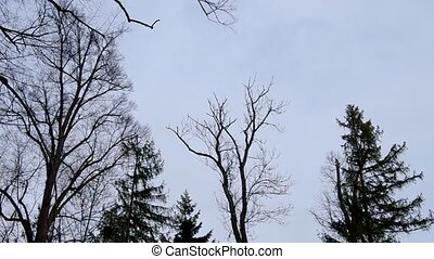 Wind blowing in the trees, sky view