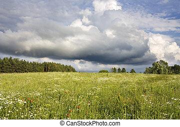 field of flowers, summer landscape