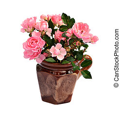 pink roses - bunch of small pink roses in ceramic pot