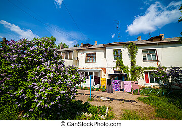 Flowering shrubs in the yard on a sunny day - Flowering...