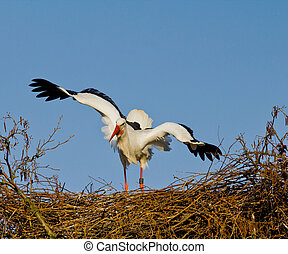 Stork in distress - A european stork in distress because she...