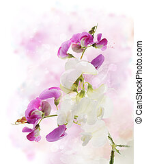 Sweet Pea Watercolor - Digital Painting Of Sweet Pea Flowers...