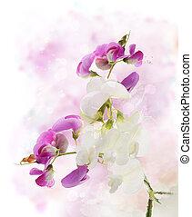 Sweet Pea Watercolor - Digital Painting Of Sweet Pea Flowers...