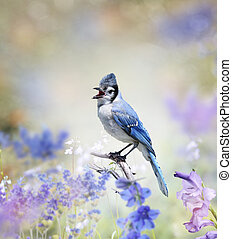 Blue Jay In The Garden - Blue Jay Perched In The Garden