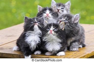 CÙte, barn, katter,