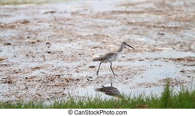 Water Bird in the Everglades - Water Bird feeding in the...