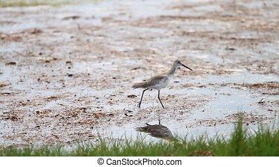 Water Bird in the Everglades