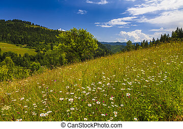 Beautiful landscape with flowering meadow, trees and hills.