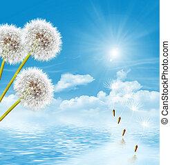 landscape dandelion flower - dandelion seeds on a blue sky