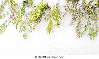Close-up of fir tree branch and snow