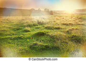 Grassland - summer grassland