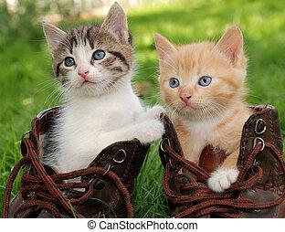 kitten in boots - couple of little kittens sitting in boots