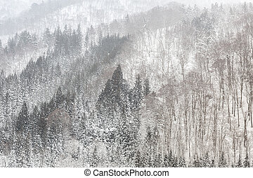 Snowfall with forest - Beautiful Snowfall winter landscape...