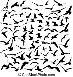 Seagulls black silhouette on white background. Vector...