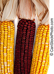 Background of indian corn