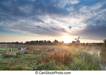 cattle on pasture and windmill at sunrise