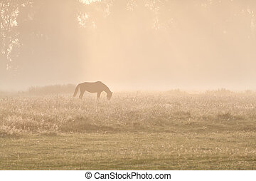 horse silhuette in sunrise fog during summer