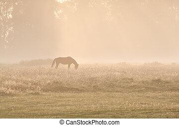 horse silhuette in sunrise fog
