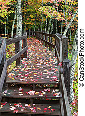 Fall Colors in Michigan Upper Peninsula - Autumn Fall Colors...