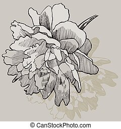Flower peony, hand-drawing. Vector illustration.