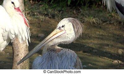 long beak birds at the zoo
