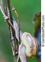 Snail crawling on green stem of plant
