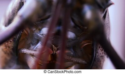 lobster, extreme close up - lobster macro shot