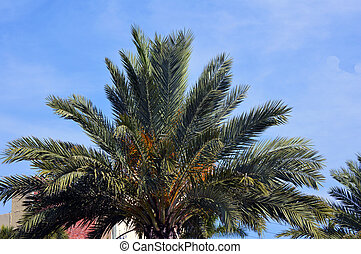 Palm tree with blue vivid sky web background