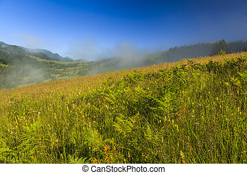 View of the mountain landscape with fog and wildflowers