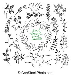 Hand sketched floral elements - Collection of hand sketched...