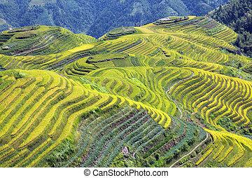 Longshen Rice Fields III