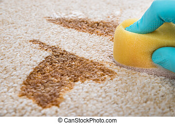 Person Cleaning Carpet With Sponge - Close-up Of Person's...